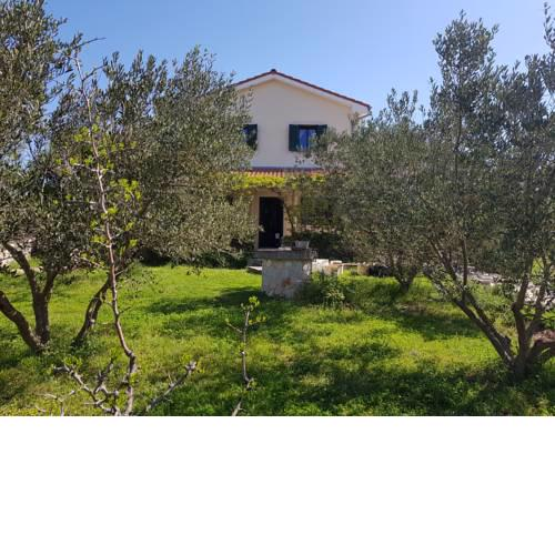 Family House with Olive Tree Garden